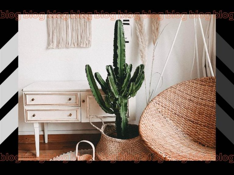 Banner mostrando parte de ambiente de casa com vaso de cacto, móvel de madeira e cadeira feita de palha