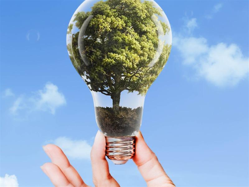 lâmpada com desenho de árvore dentro dela